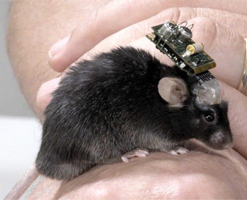NeuroLogger - In Hand